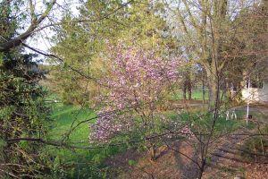 LHF spring